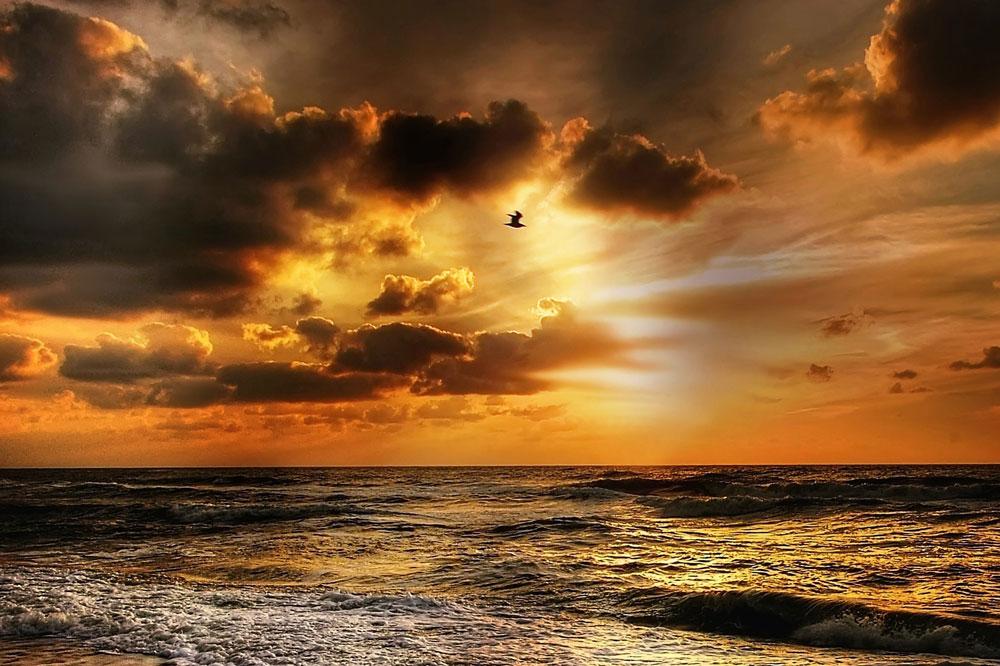 Sonnenuntergang am Meer mit goldenen Wolken und einem Vogel im Bild