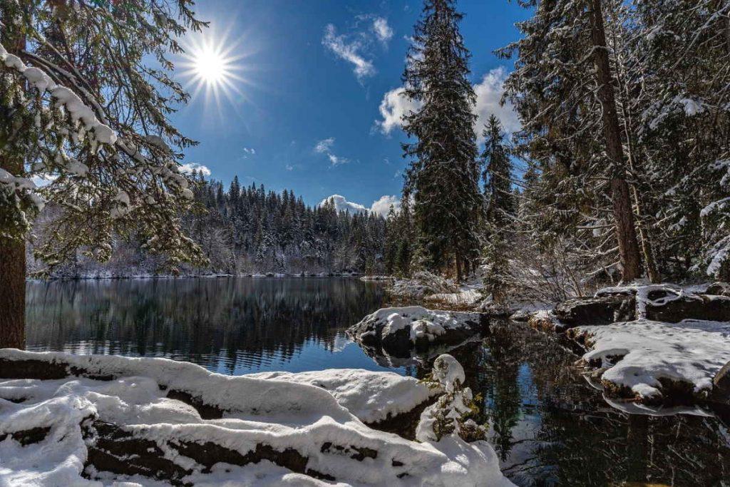 Winterwald mit See